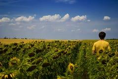 Feld der Sonnenblumen und des Funktionsmannes am Sommer Stockfotos