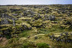Feld der vulkanischen vulkanischen Lava, Island Stockfotos