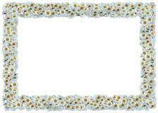 Feld der weißen Gänseblümchen stock abbildung