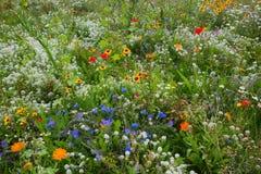 Feld der wilden Blume stockbild