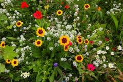 Feld der wilden Blume stockbilder