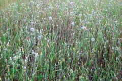 Feld der wilden Blumen Stockbild