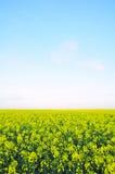 Feld der wilder Senf-Blumen Stockfotografie