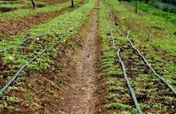 Feld des Ackerlands für wachsen Gemüse Stockfotografie