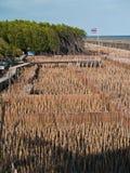 Feld des Bambusgefäß- und Ansichtpunktes Stockfotografie