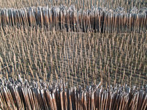 Feld des Bambusgefäßes Stockfotos