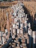 Feld des Bambusgefäßes Lizenzfreie Stockfotografie