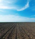 Feld des bewölkten Himmels und des Frühlinges Lizenzfreies Stockbild