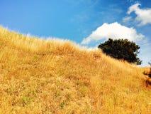 Feld des blauen Himmels und des Goldes Lizenzfreies Stockbild