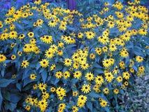 Feld des Blaus und des Gelbs Lizenzfreies Stockfoto