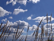 Feld des braunen Grases beeinflussend in den Wind Lizenzfreies Stockfoto