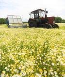 Feld des bunten Gänseblümchens mit Ackerschlepper im Hintergrund Stockfoto