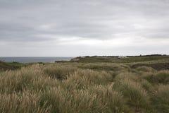 Feld des Dünen-Grases Stockbild
