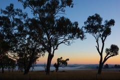 Feld des frühen Morgens mit Nebel Lizenzfreies Stockfoto
