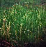 Feld des Frühlinges stockbilder