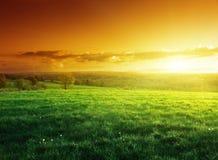 Feld des Frühlingsgrases in der Sonnenuntergangzeit Lizenzfreie Stockbilder