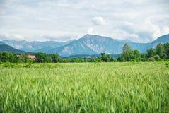 Feld des Frühlingsgrases und -berge Stockfoto
