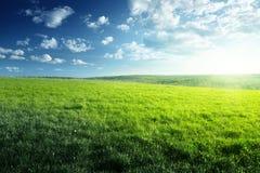 Feld des Frühlingsgrases und -waldes Stockbild