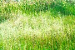 Feld des frischen grünen Grases Lizenzfreie Stockfotografie