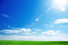 Feld des frischen grünen Grases und des hellen blauen Himmels Stockfotos