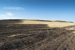 Feld des gebrannten Stubble lizenzfreies stockbild