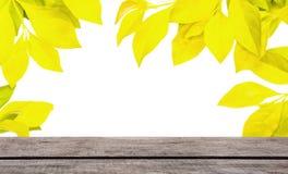 Feld des gelben Blattes mit hölzernem Stockbilder