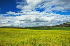 Feld des gelben Rapssamens gegen den blauen, bewölkten Himmel Lizenzfreie Stockbilder