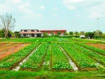 Feld des Gemüses und des kleinen Abzugsgrabens Stockbild