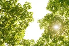 Feld des glühenden grünen Urlaubs mit Sonnenlicht Lizenzfreie Stockfotos