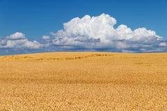 Feld des goldenen Weizens gegen Himmel Stockbilder