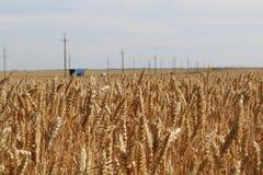 Feld des goldenen Weizens unter dem bewölkten Himmel und kaum sichtbares in der Abstandsbahn mit Autos lizenzfreies stockfoto