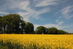 Feld des Goldes Stockbild