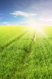 Feld des grünen Grases Stockbild