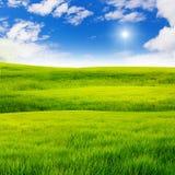 Feld des grünen Grases Stockfotografie