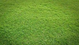 Feld des grünen Grases lizenzfreie stockfotos