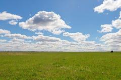 Feld des grünen Grases Lizenzfreie Stockfotografie