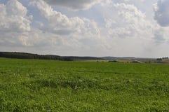 Feld des grünen Grases dehnt in den Abstand aus Lizenzfreies Stockfoto