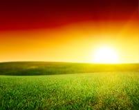 Feld des grünen Grases des Sommers Lizenzfreies Stockbild