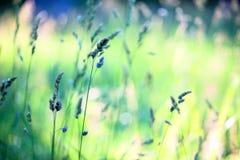 Feld des grünen Grases gegen einen blauen Himmel mit wispy weißen Wolken