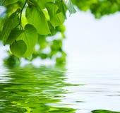 Feld des grünen Grases gegen einen blauen Himmel mit wispy weißen Wolken Lizenzfreie Stockfotografie
