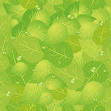 Feld des grünen Grases gegen einen blauen Himmel mit wispy weißen Wolken Lizenzfreie Stockfotos