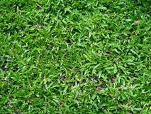 Feld des grünen Grases im Garten Lizenzfreies Stockbild
