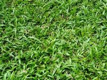 Feld des grünen Grases im Garten Stockfotos