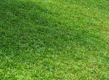 Feld des grünen Grases im Garten Lizenzfreie Stockbilder