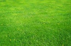 Feld des grünen Grases mit Blumen Stockfotos