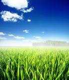 Feld des grünen Grases und des blauen bewölkten Himmels Stockfotos