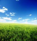 Feld des grünen Grases und des blauen bewölkten Himmels Stockfoto