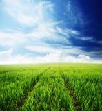 Feld des grünen Grases und des blauen bewölkten Himmels Lizenzfreie Stockfotos