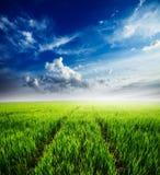Feld des grünen Grases und des blauen bewölkten Himmels Stockbild