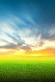 Feld des grünen Grases und des Himmels Stockfotos